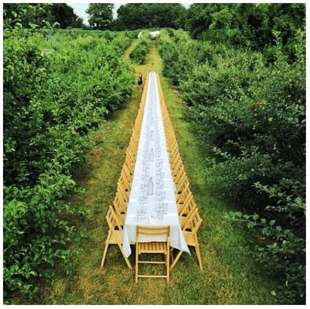 Long dining table in a vineyard clearing.