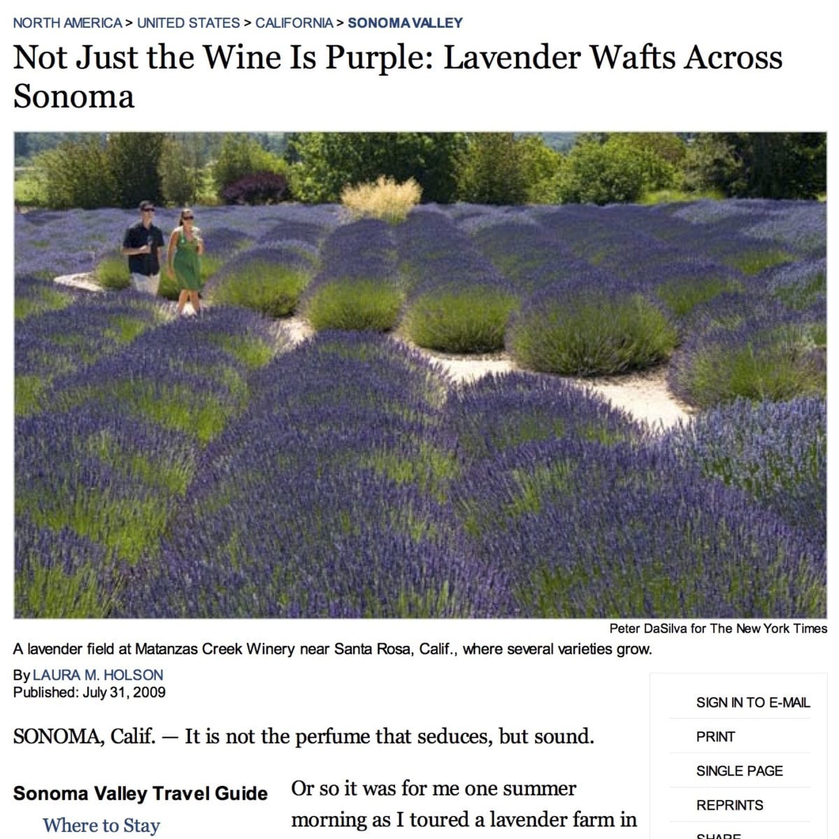 New York Times article. Headline Text: Not Just the Wine is Purple; Lavender Wafts Across Sonoma.