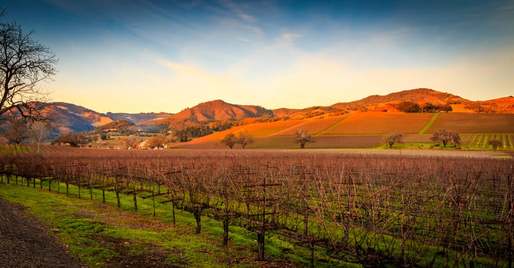Photo of a Sonoma Vineyard at Dusk. Visiting a Winery Is One of the Best Things to Do in Sonoma County